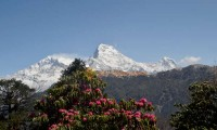 Ghorepani Annapurna Base Camp Trek