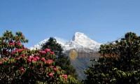 Ghorepani spring trek nepal poonhill