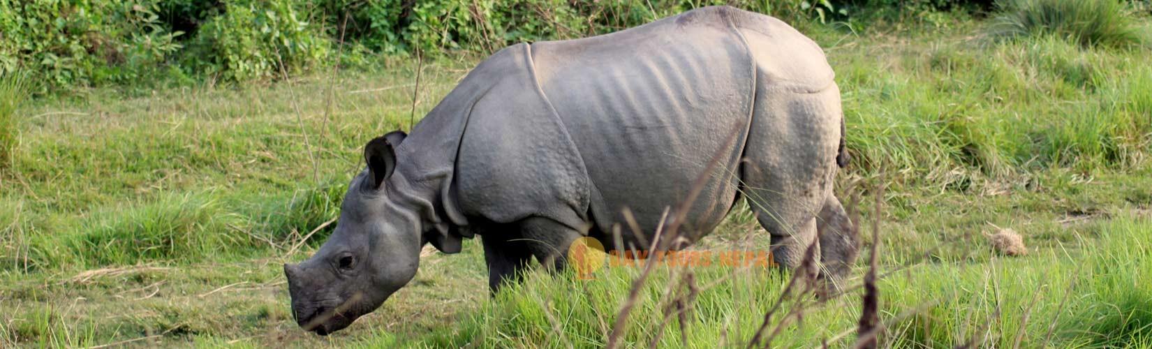 jungle safari bardia national park