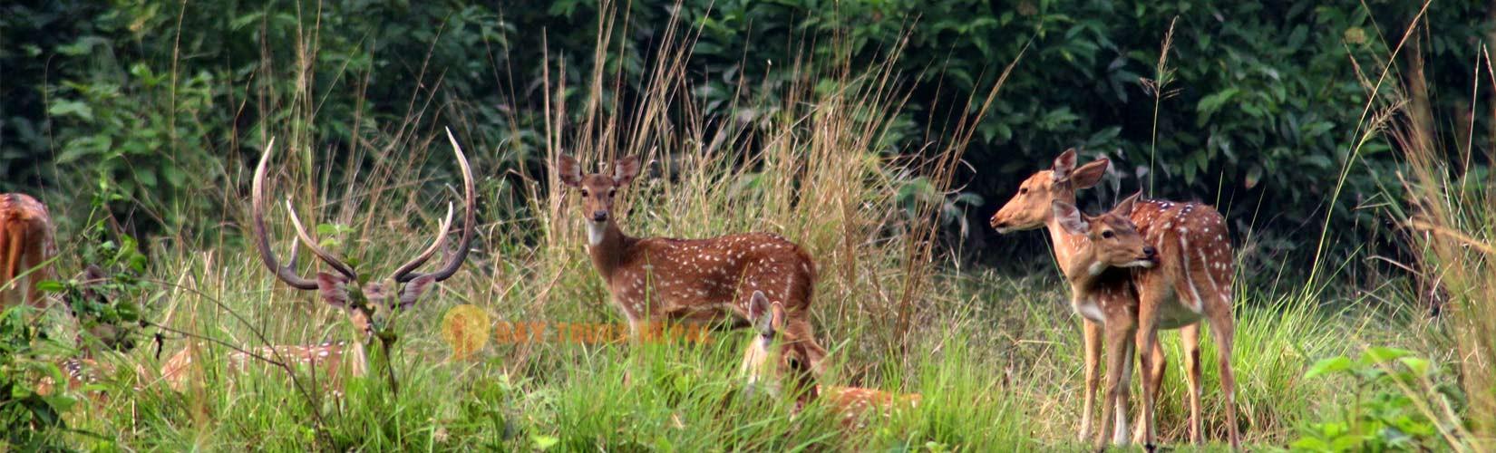 Bardia National Park Safari Tour